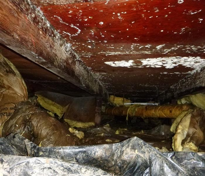 Crawl space Microbial Growth Invasion Before